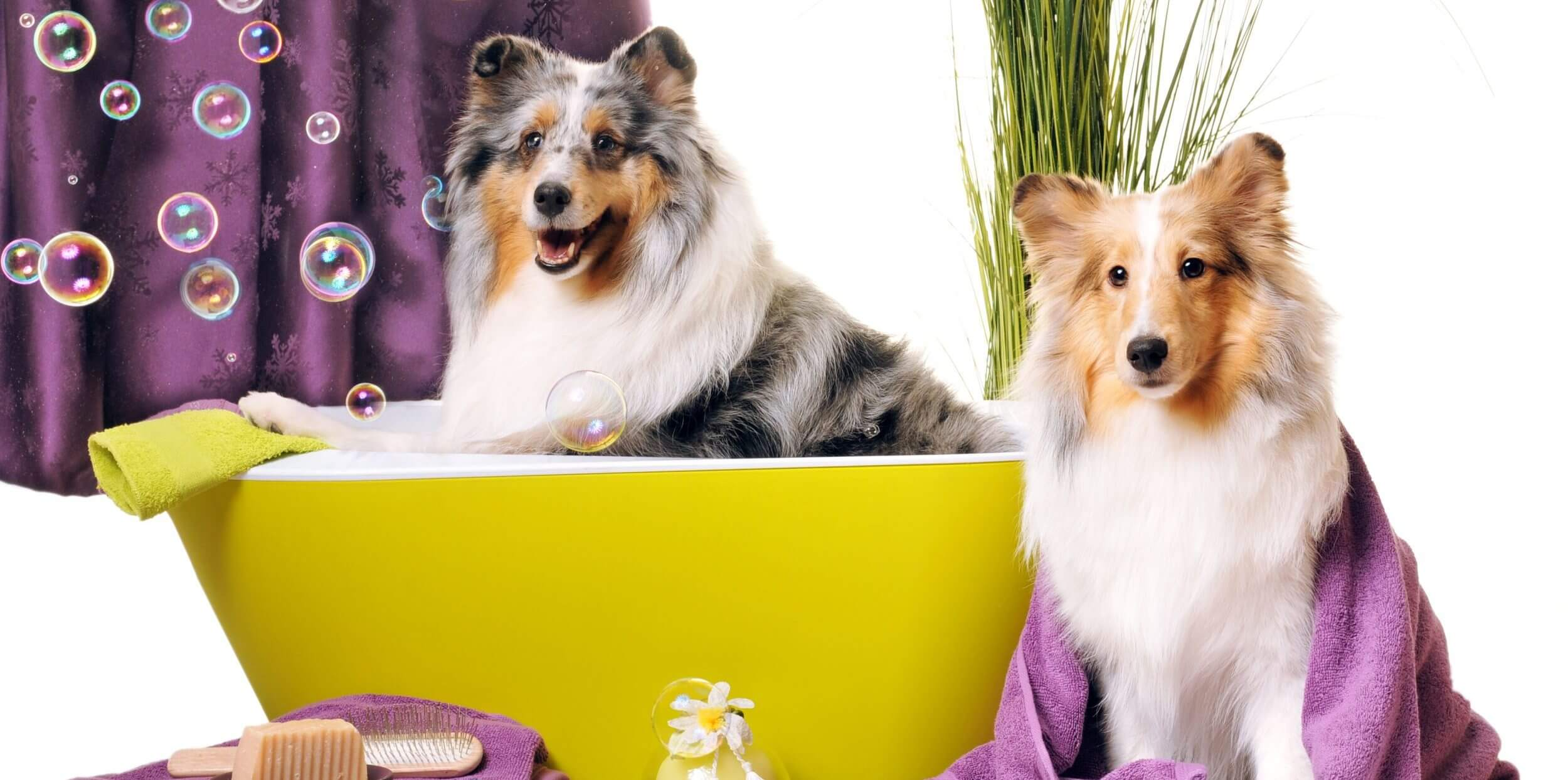 So Fresh and So Clean: Pet Grooming at Meadowrun Affordable Pet Care